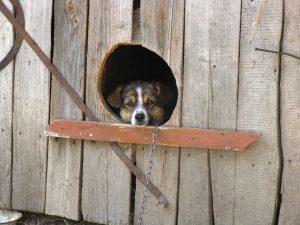 """""""Серед ночі пес загавкав"""""""