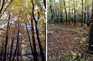 Ліс та грибочки (фоторепортаж)